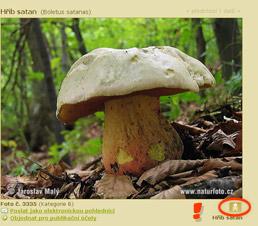 Fungi mushrooms