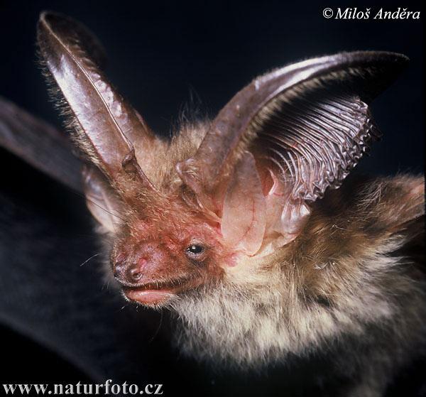 コウモリの画像 p1_14