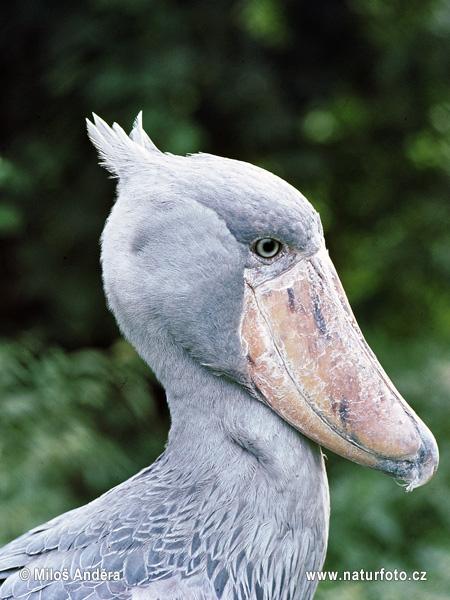 stork sverige