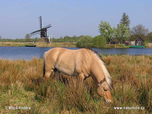 Holland region