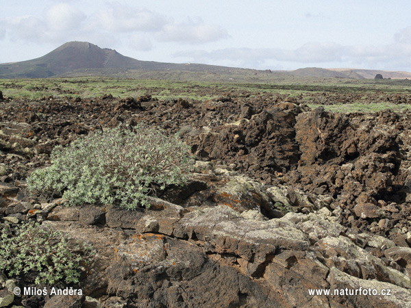 Lanzarote, Canary Islands (E)