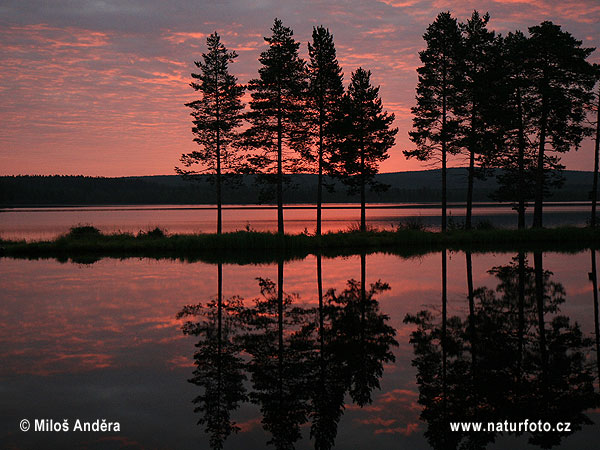 Lapland, sunrise (S)