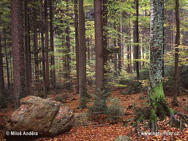 National Park Bavarian Forest (DE)