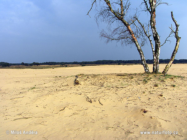 National Park Hoge Veluwe