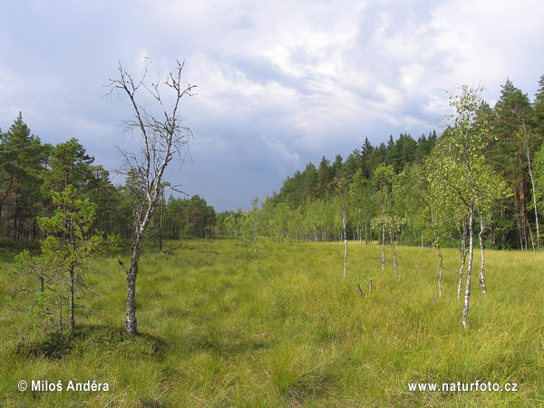 National Park Kurjenrahka (F)