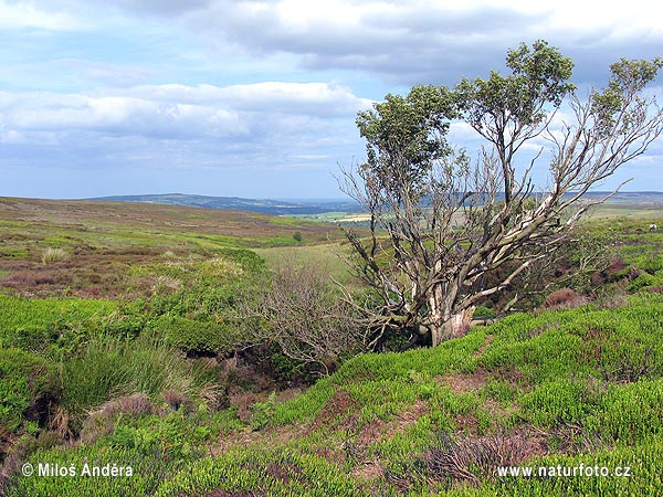 National Park North York Moors (UK)