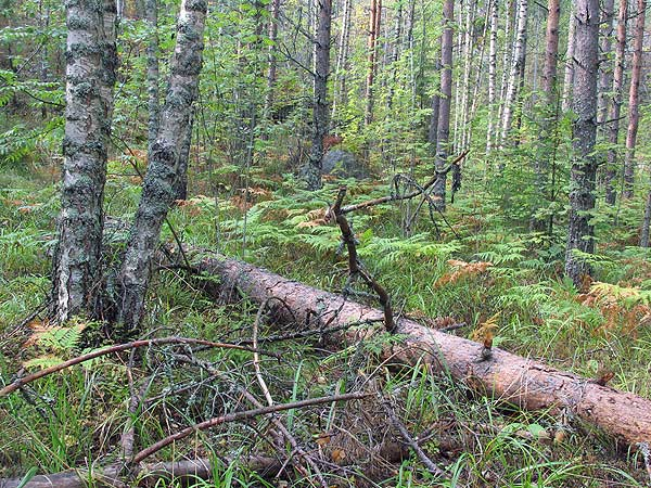 National Park Nuuksio
