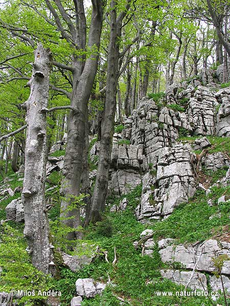 National Park Risnjak (HR)