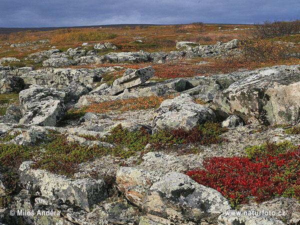 National Park Varanger (Varangerhalvøya) Photos, National ... | 600 x 450 jpeg 195kB