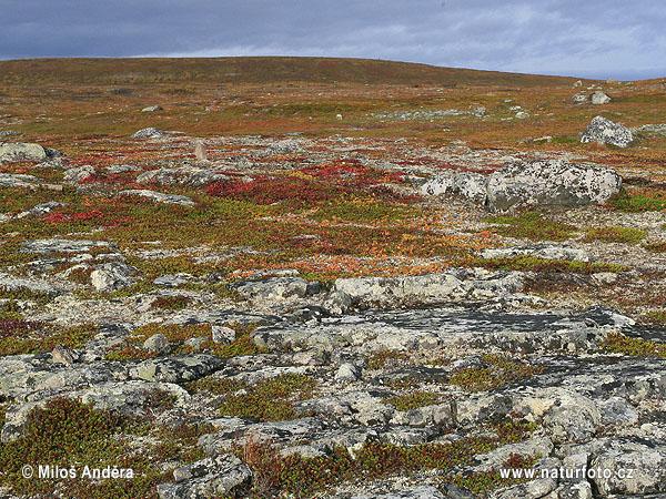 National Park Varanger (Varangerhalvøya) Photos, National ... | 600 x 450 jpeg 193kB