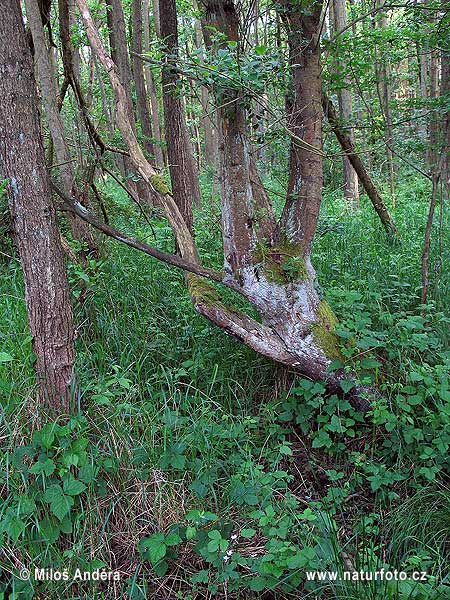 National Park Vorpommersche Boddenlandschaf (DE)
