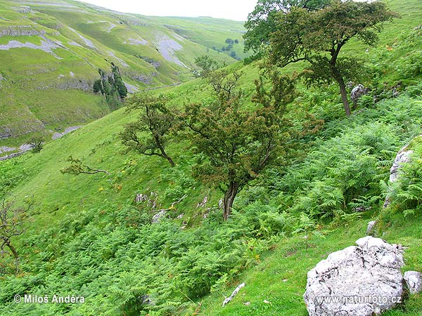National Park Yorkshire Dales (UK)