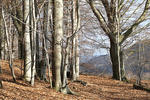 Beech wood, Early spring