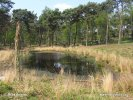 National Park De Maasduinen