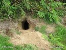Wild Rabbit, burrow