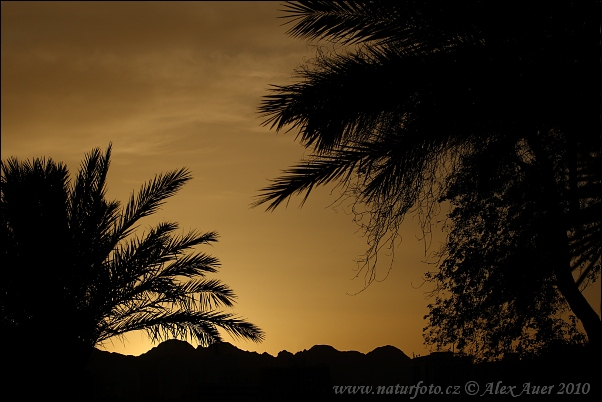 Israel - Evening in Eilat (IL)