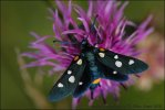 Variable Burnet