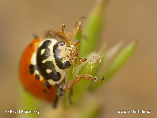 عکس حشرات