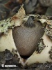 Berkeley's Earthstar