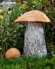 Orange Birch Bolete