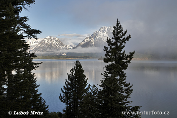 Grand Teton, Jackson Lake (Wyoming, USA)