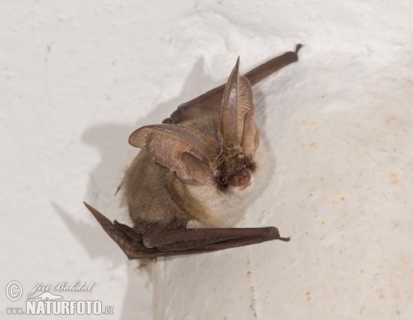 コウモリの画像 p1_19