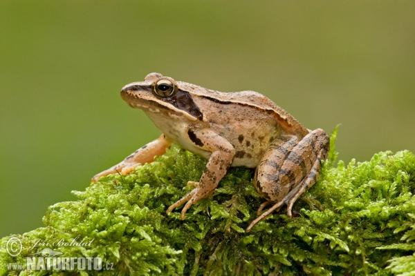 bonne nuit dans image bon nuit, jour, dimanche etc. agile-frog-32000