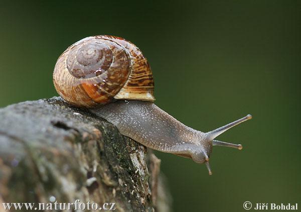 [Linked Image von naturephoto-cz.com]