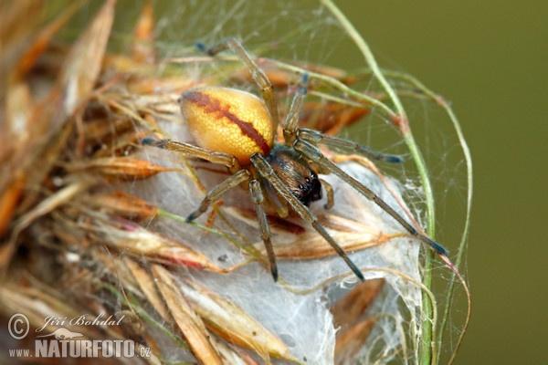 Spider Photos, Spider Images, Nature Wildlife Pictures ...