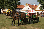 Festivities in the Village Holasovice