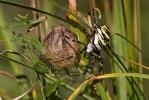 Orb-weaver Spiders