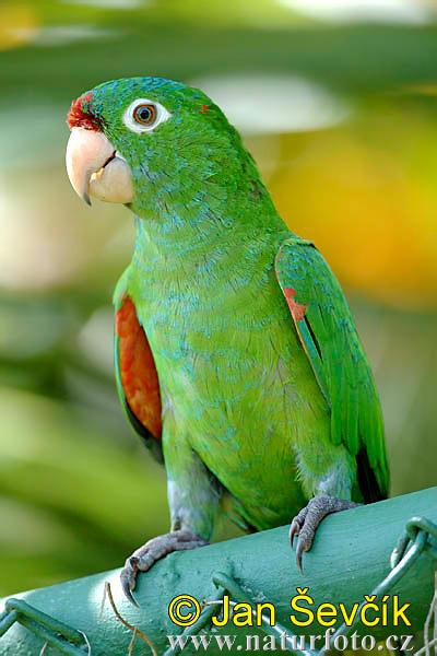 عكس طوطی-پرنده زیبا