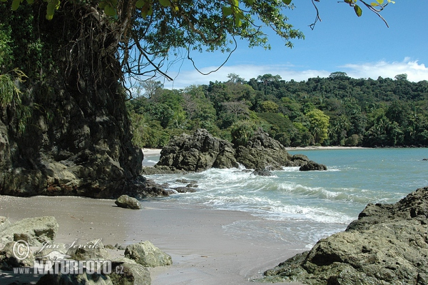 Coast of the Pacific, National park Manuel Antonio (CR)