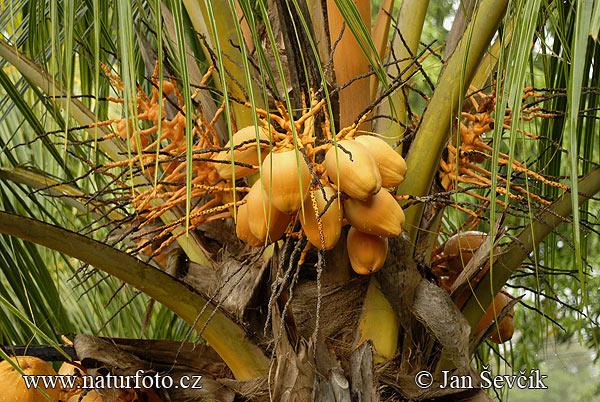 buona notte dans immagini buon...notte, giorno coconut--kokos-1