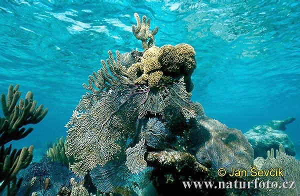bonne nuit dans image bon nuit, jour, dimanche etc. coral-reef--coral-reef