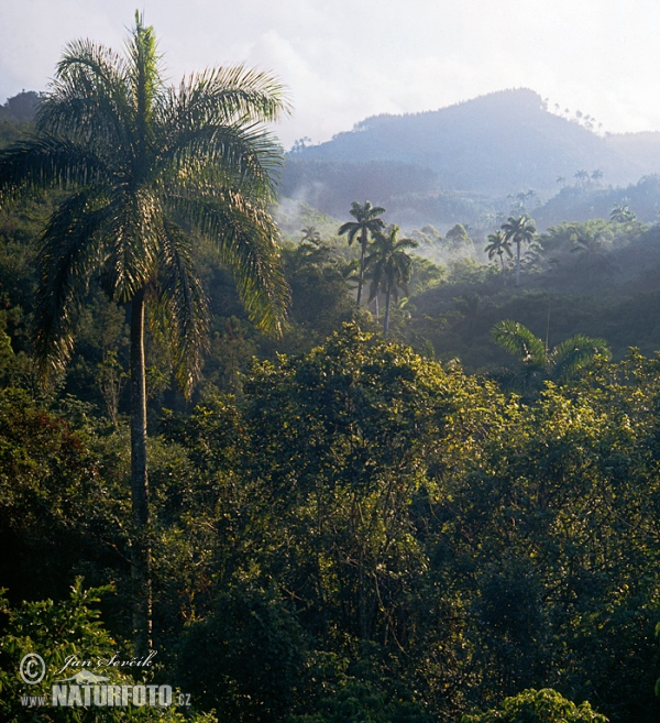 Escambray mountains (C)