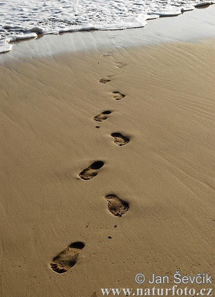 Footprints In Sand Photos Footprints In Sand Images Nature Wildlife Pictures Naturephoto