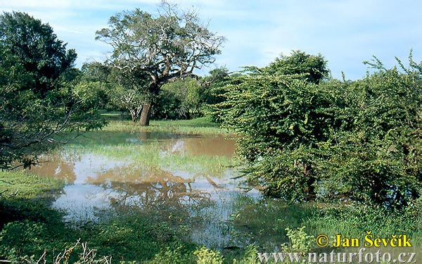 National Park Yala (CL)