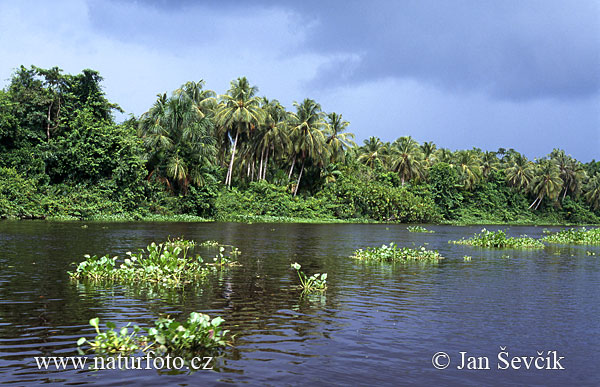 orinoco river on map. Orinoco River Delta