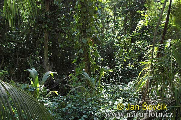 Rain forest, National park Cahuita (CR)