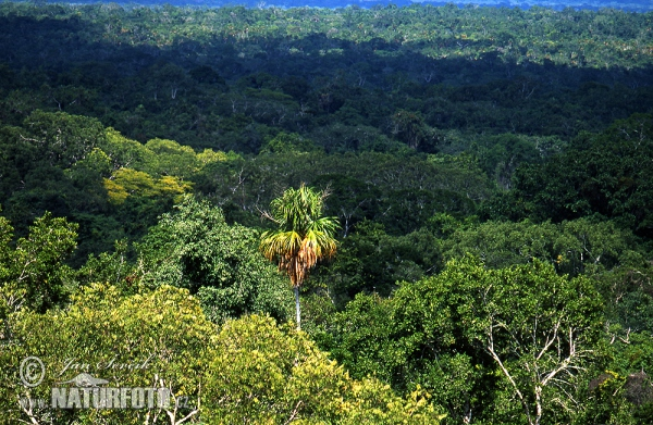 Rainforest Petén (GCA)