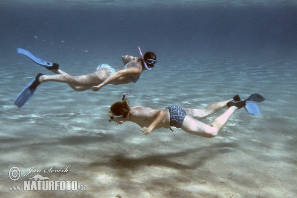Snorchelling (People)