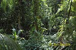 Rain forest, National park Cahuita