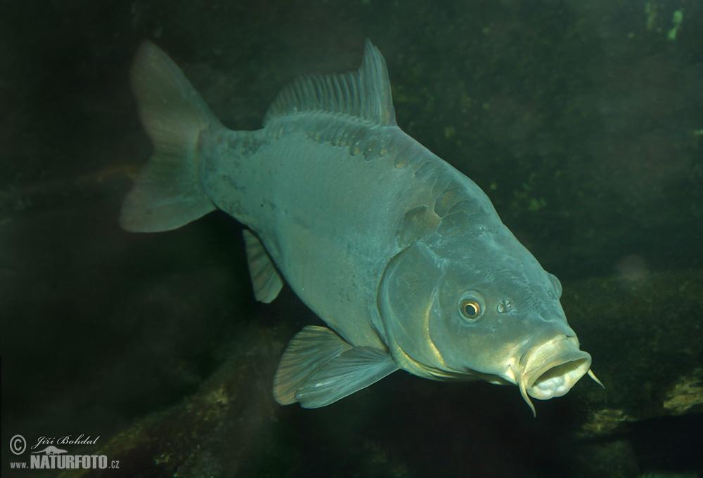 मछलियों का वर्ग